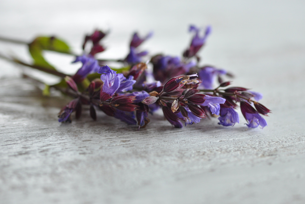 Edible sage flowers